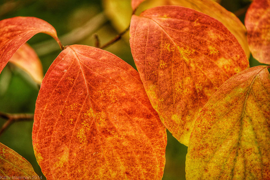 Architecture Photograph - Autumn Leaves by Kathi Isserman