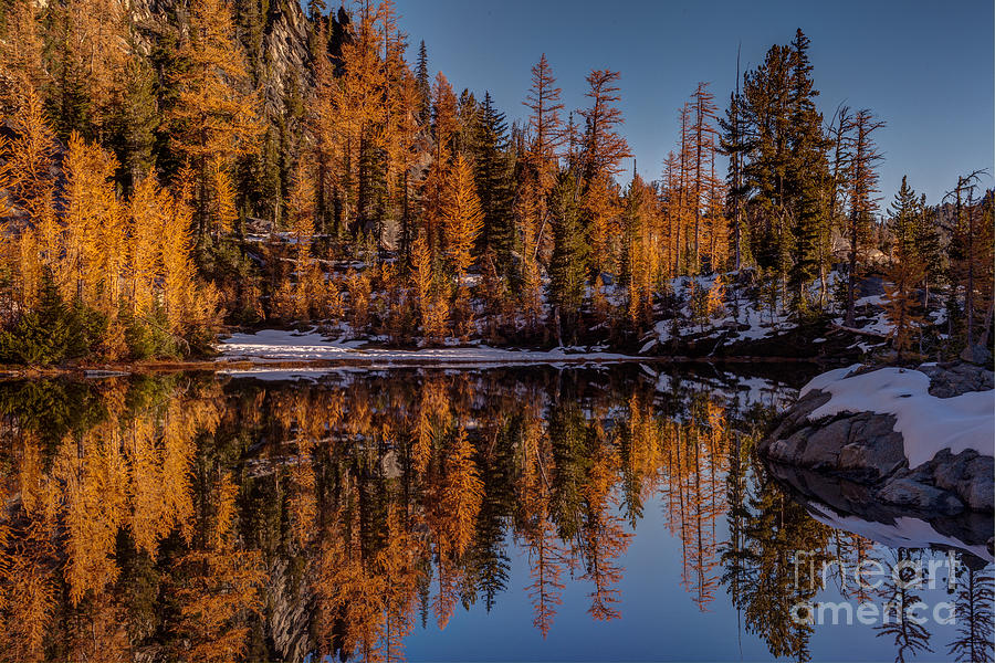 Larches Photograph - Autumn Reflected by Mike Reid