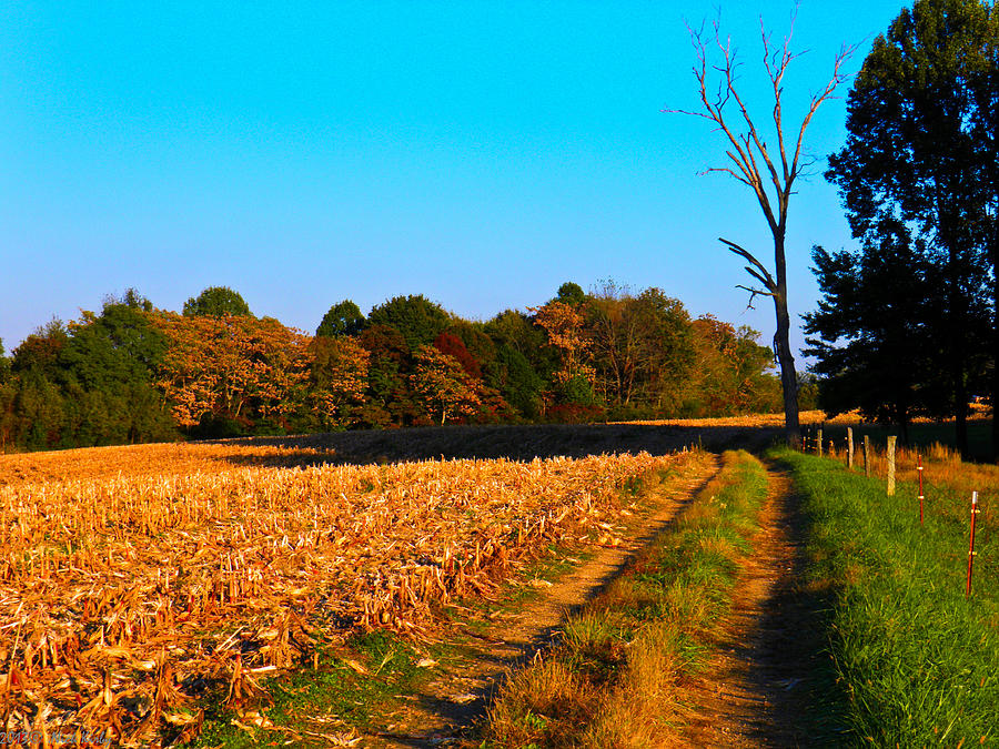 Road Photograph - Autumn Road by Nick Kirby