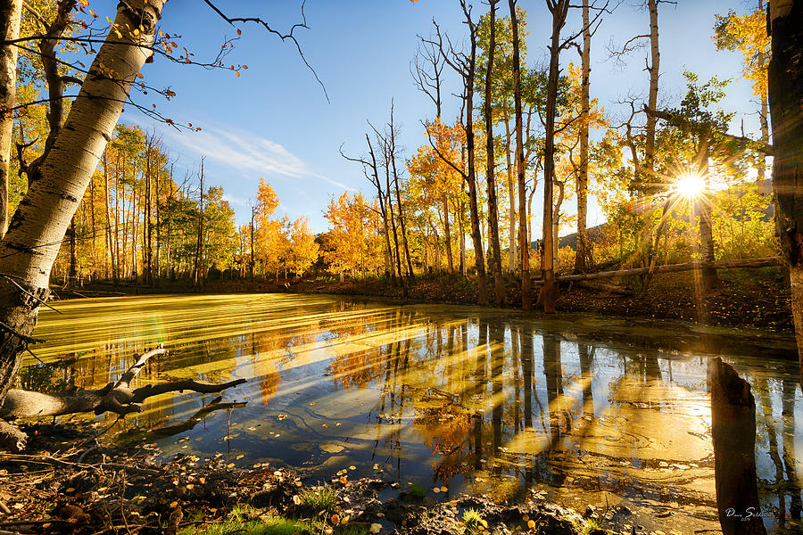 Autumn Shadows by David Soldano