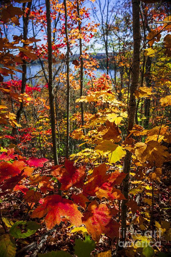 Forest Photograph - Autumn Splendor by Elena Elisseeva