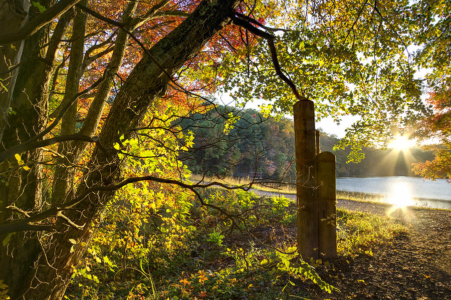 Appalachia Photograph - Autumn Trail by Debra and Dave Vanderlaan