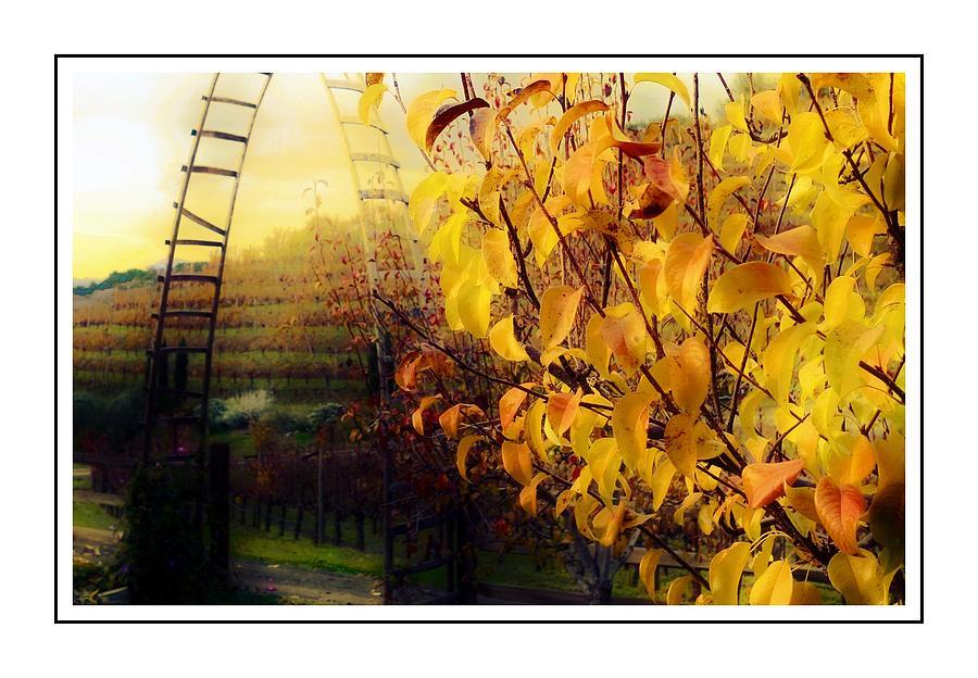 Autumn Photograph - Autumn Vines by Michael Hope