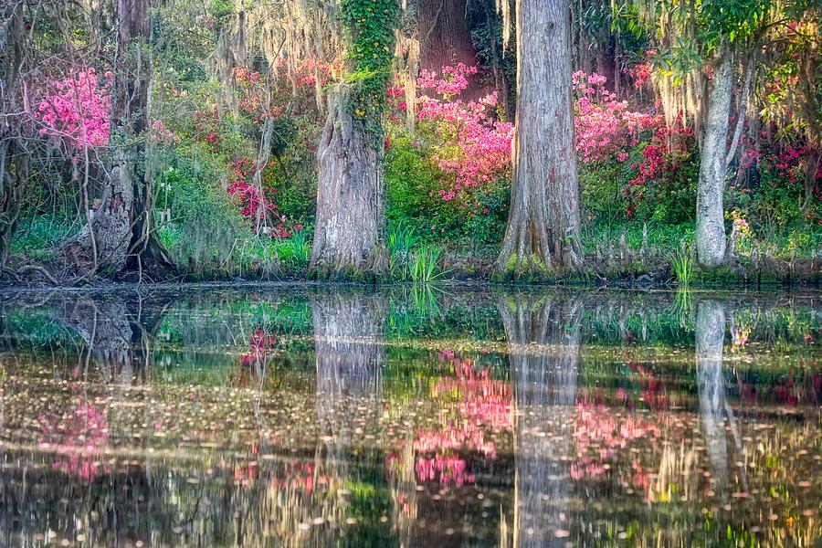 Azalea Photograph - Azalea Dreamscape by William Britten