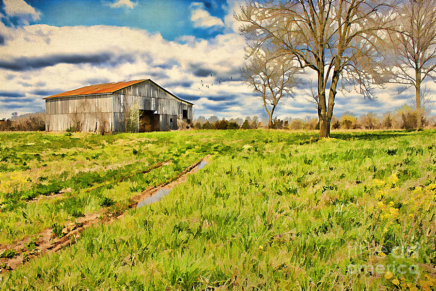 Acre Photograph - Back Roads Of Kentucky by Darren Fisher