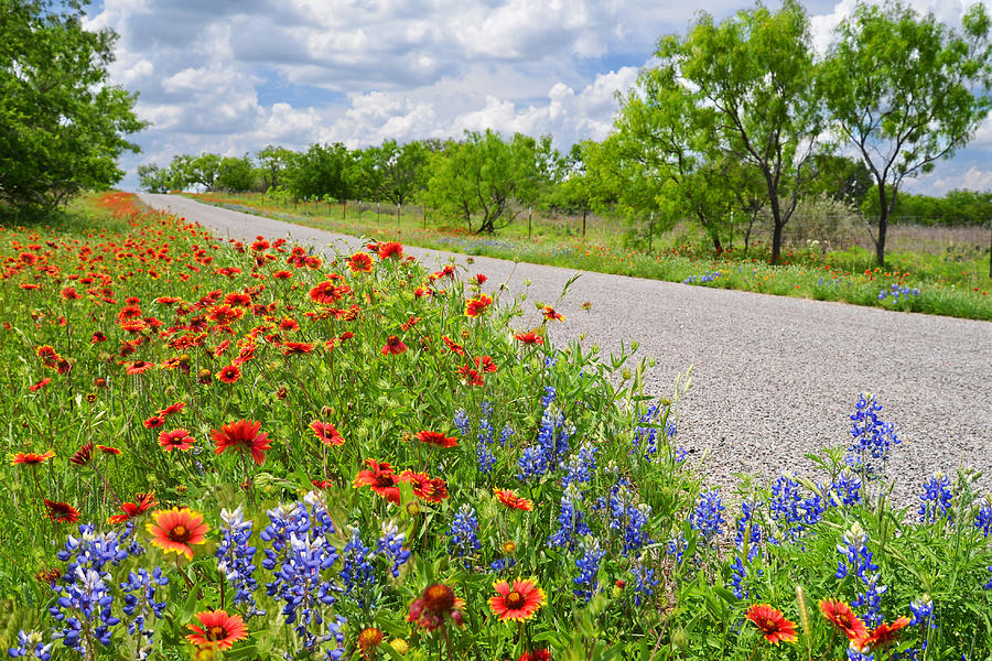 Texas Photograph - Backroad Beauty by Lynn Bauer