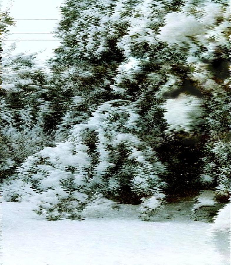 Snow Photograph - Backyard Snow by Elaine Williams