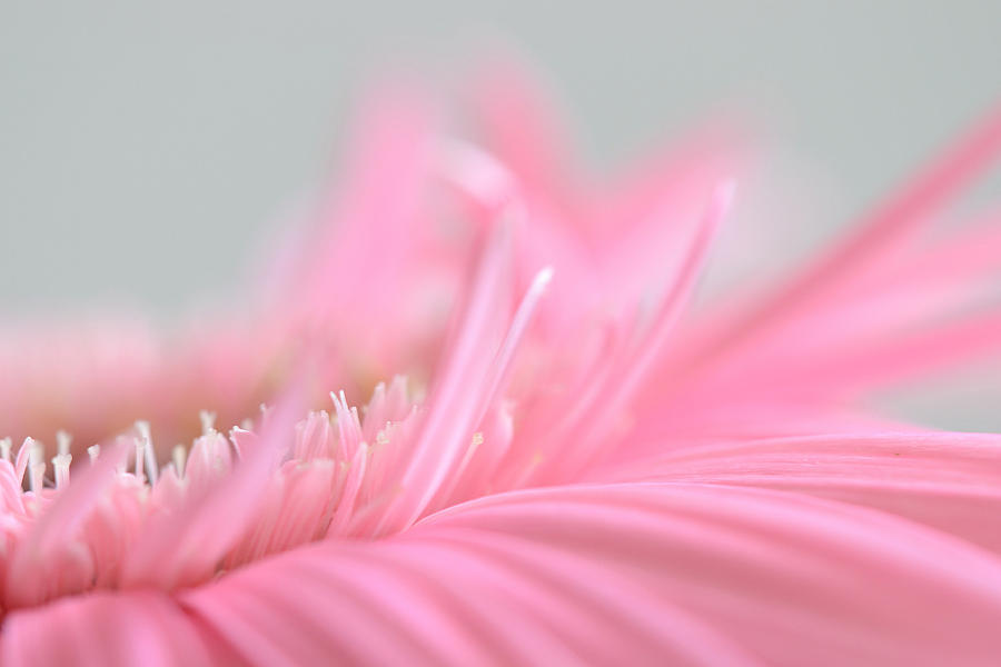 Flower Photograph - Balance by Melanie Moraga