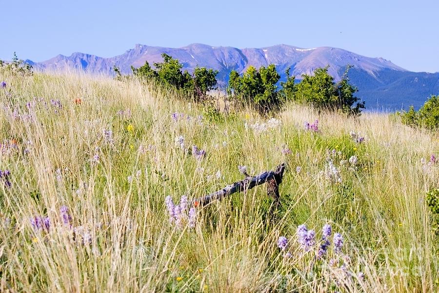 Bald Mountain Trail Photograph