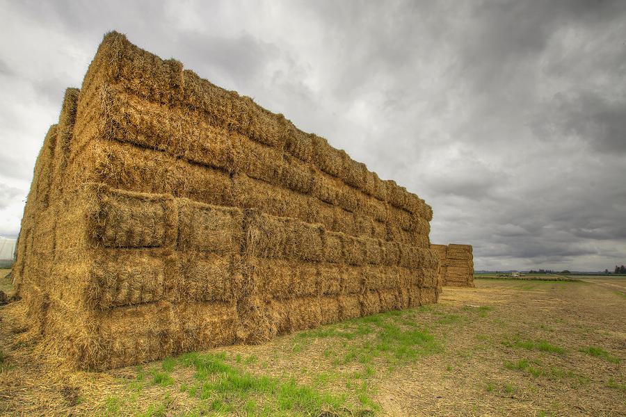 Bales Photograph - Bales Of Hay On Farmland 4 by David Gn