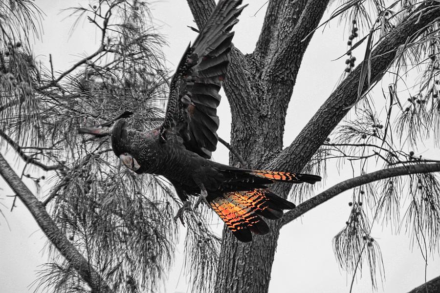 Flight Photograph - Base Jumper by Douglas Barnard