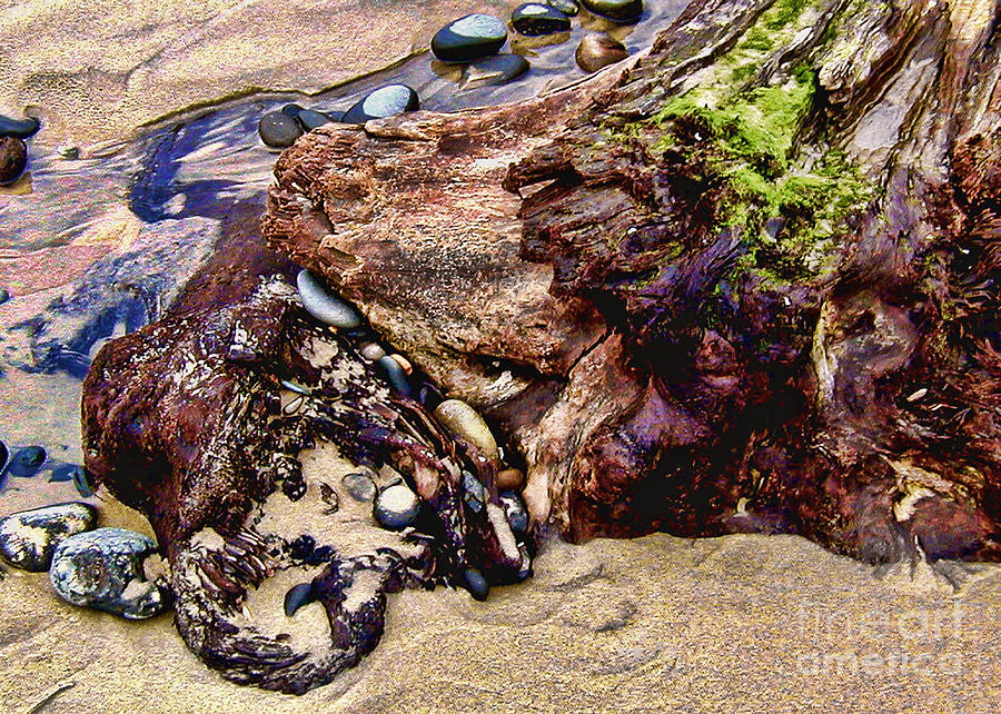 Log Photograph - Beach Stump And Stones by Joseph Vittek