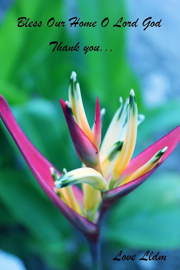 Beautiful Flower Photograph
