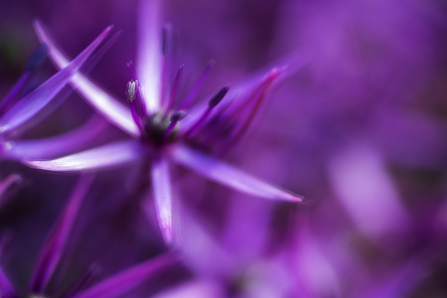 Flower Photograph - Beautiful Purple Floral Abstract by Matthew Gibson