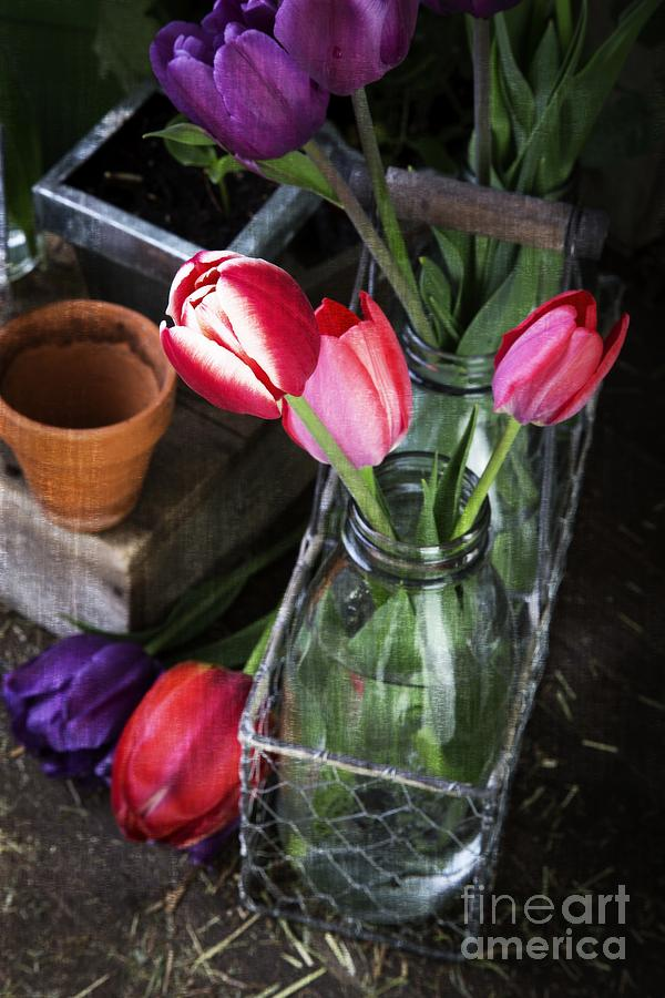 Barn Photograph - Beautiful Spring Tulips by Edward Fielding