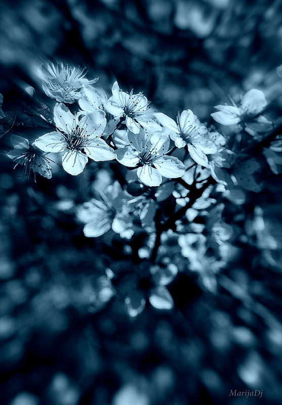 Nature Photograph - Beauty by Marija Djedovic