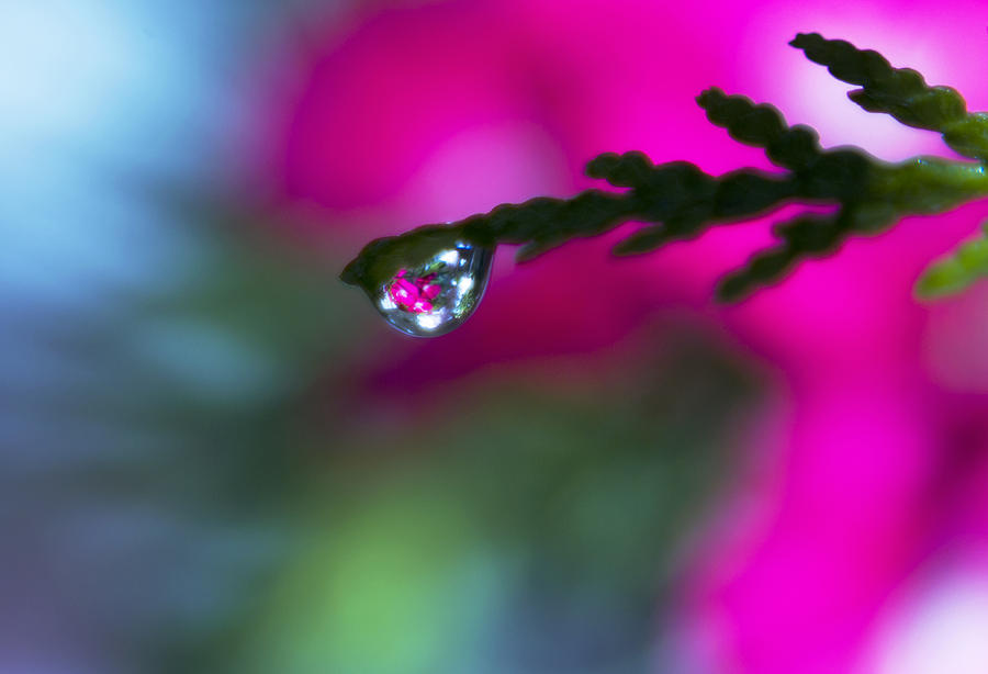 Water Drops Photograph - Beauty Within by Dana Moyer