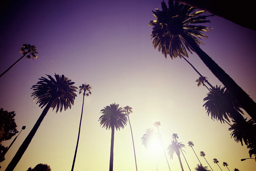 Beverly Hills Palm Trees Photograph by Lpettet