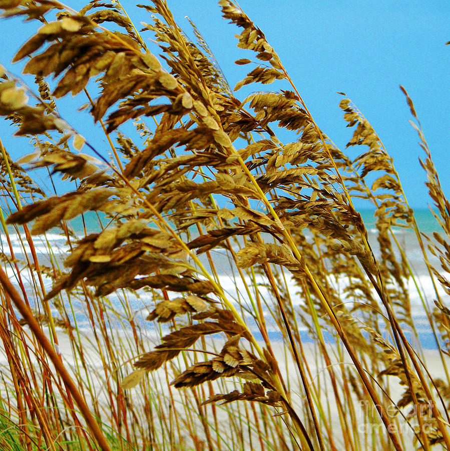 Beach Photograph - Beyond The Sea Oats Lies Eternity by Lorraine Heath
