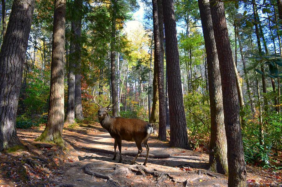 Deer Digital Art - Big Buck by Bob Jackson