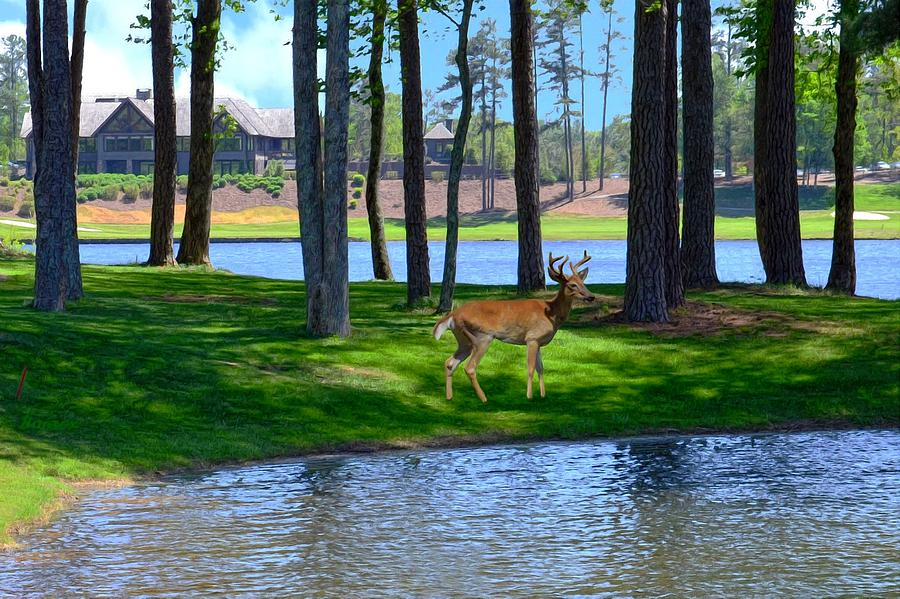 Buck Digital Art - Big Canoe Buck by Bob Jackson