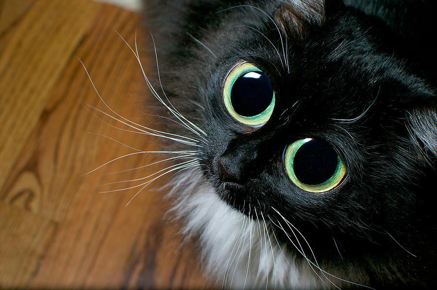 Kitty | 2048