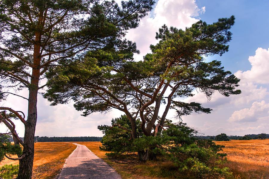 Netherlands Photograph - Bike Track In Hoge Veluwe National Park. Netherlands by Jenny Rainbow