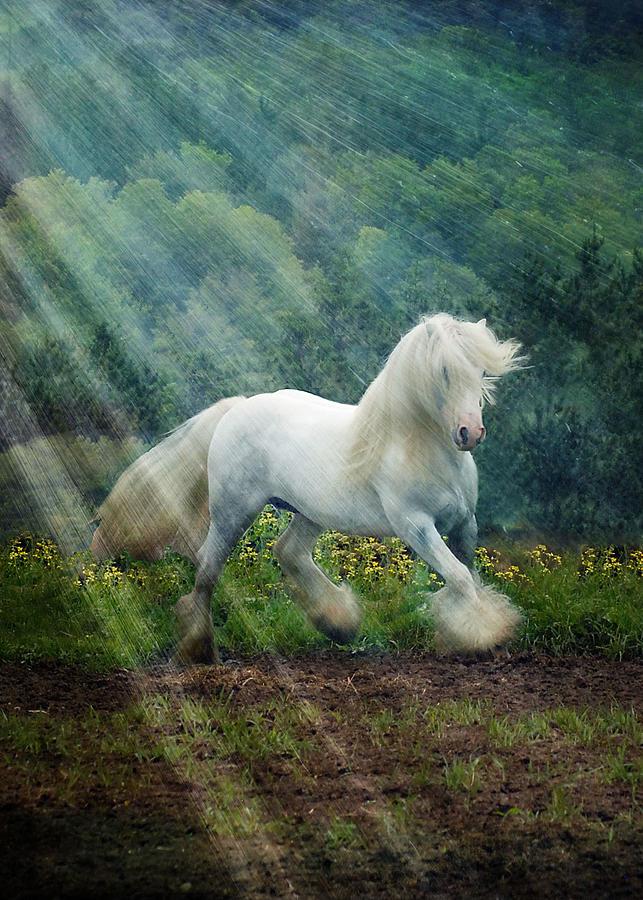 Horses Photograph - Billy Rays by Fran J Scott