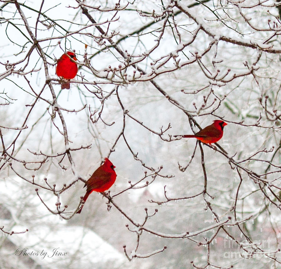 Red Bird Photograph - Birds Of A Feather by Jinx Farmer