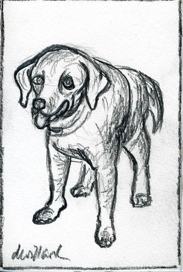 Dog Drawing - Black Lab 4 by Deborah Willard