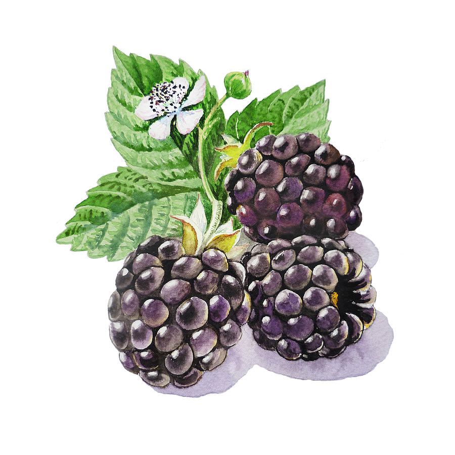 Blackberry Painting - Artz Vitamins Series The Blackberries by Irina Sztukowski