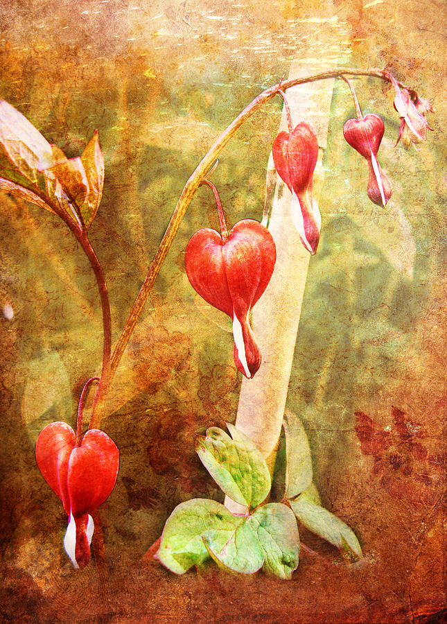 Bleeding Heart by Helene U Taylor
