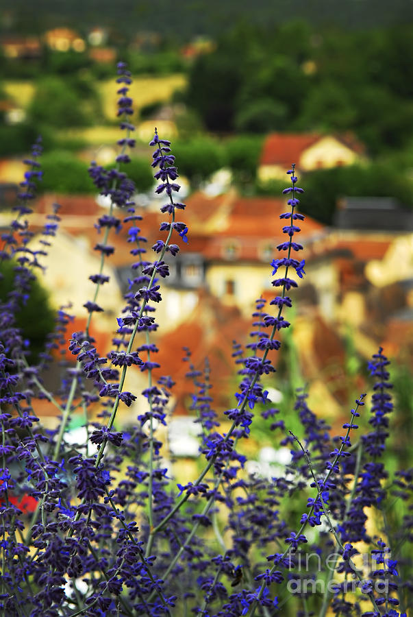 Sarlat Photograph - Blue Flowers And Rooftops In Sarlat by Elena Elisseeva