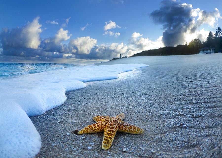 Blue Foam Starfish Photograph By Sean Davey