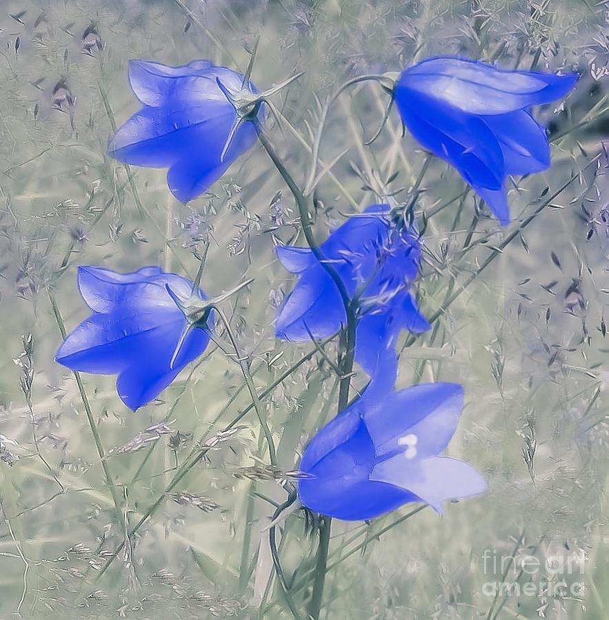 Flower Photograph - Bluebells by Sylvia  Niklasson