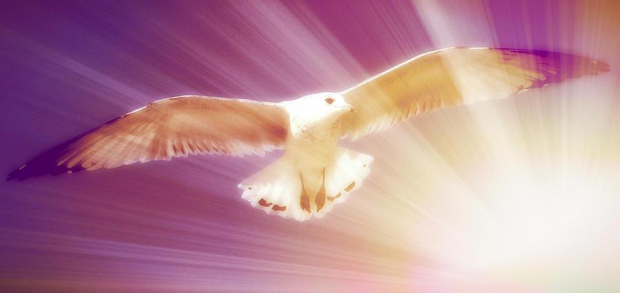 Bird Photograph - Boundless II by Aurelio Zucco