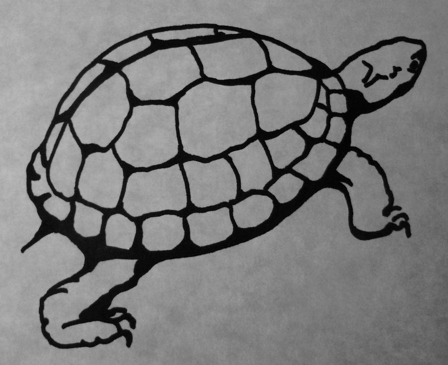 box turtle drawing by joann renner