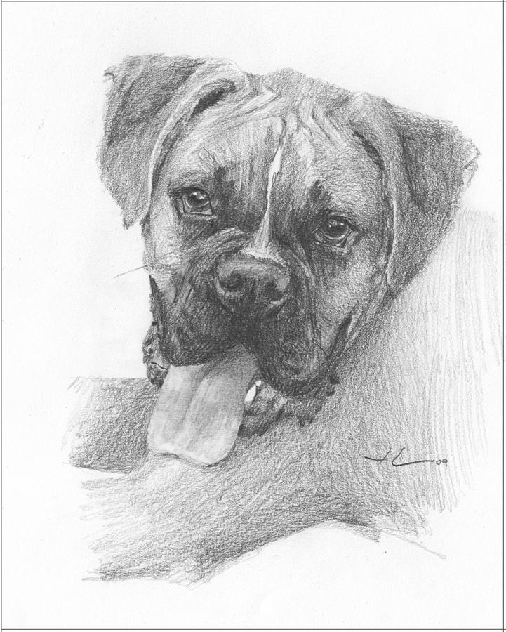 Boxer Dog Pencil Portrait Drawing by Mike Theuer