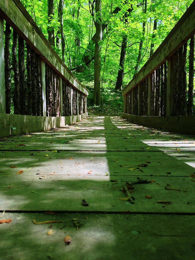 Bridge Photograph - Bridge In The Woods by Andrew Martin