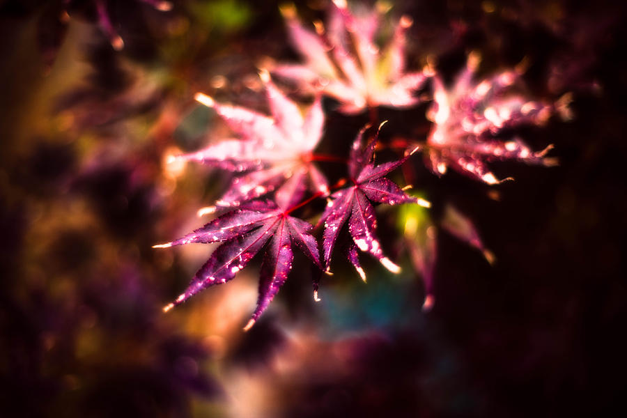 Autumn Photograph - Bright Leaves by J Riley Johnson