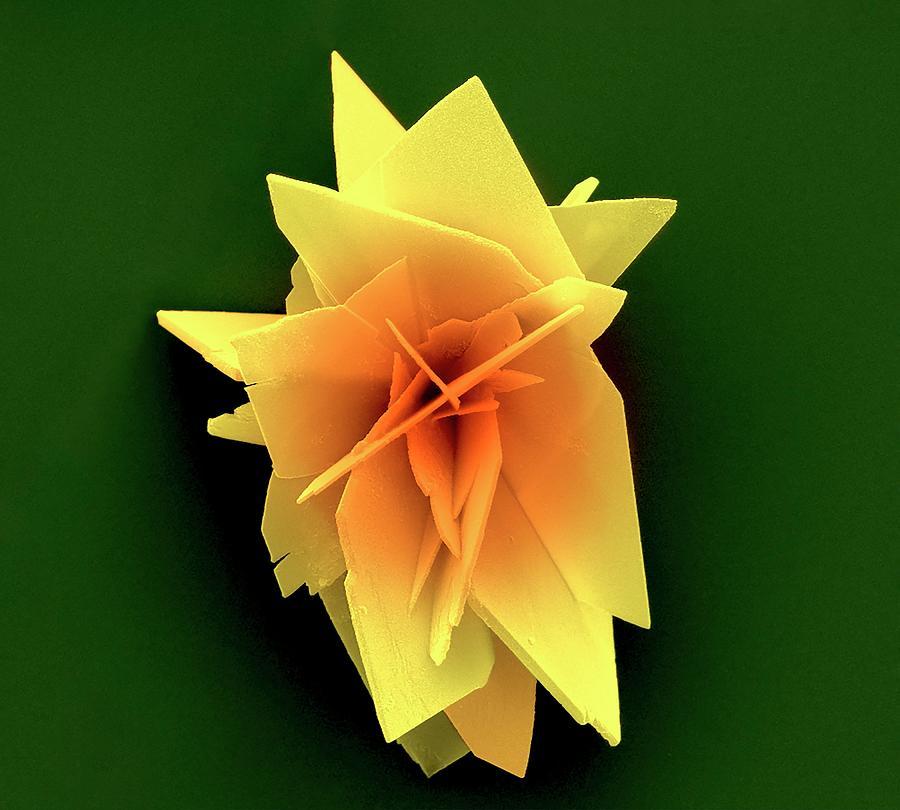 Chemistry Photograph - Brushite Crystals by Kseniya Shuturminska / Science Photo Library