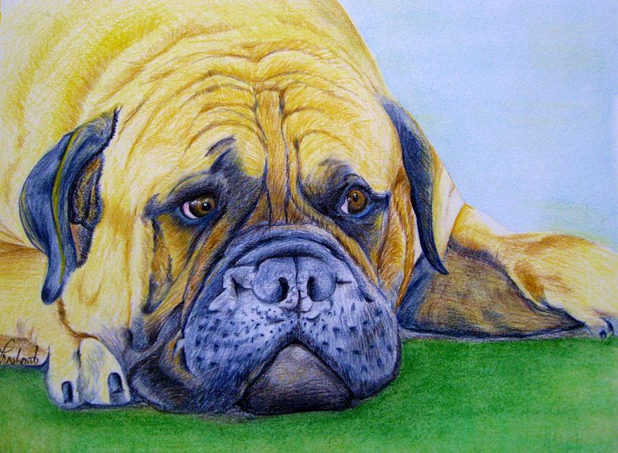 English Bulldog Painting - Bulldog by Prashant Shah
