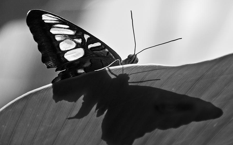 Butterfly Photograph - Butterfly II by Ron White