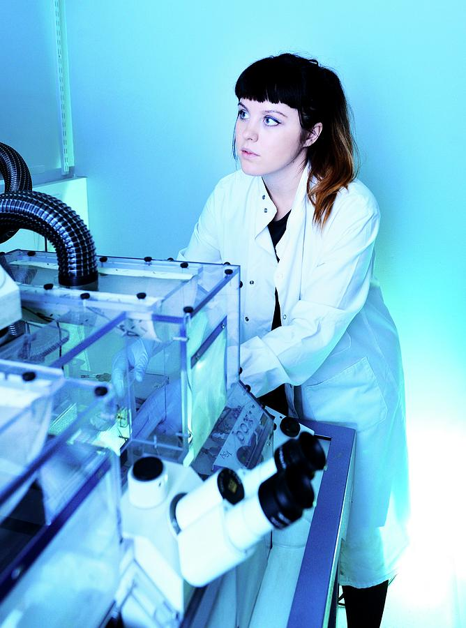 Human Photograph - Calcium-imaging Neuron Microscopy by Mcs