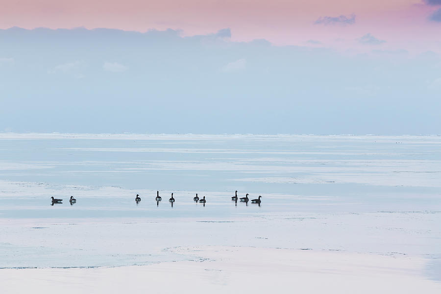 Canadian Geese Sit On Lake Ontario Photograph by Ed Norton