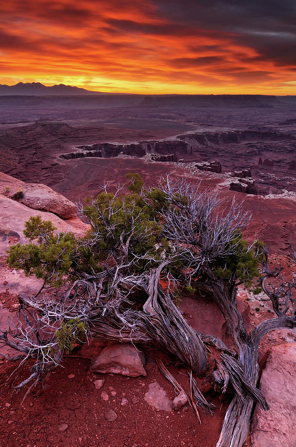 Canyonlands Sunrise Landscape With Dry Photograph by Rezus