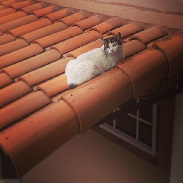 Animal Photograph - #cat #cats #tagsforlikes #catsagram by Ivette Velez