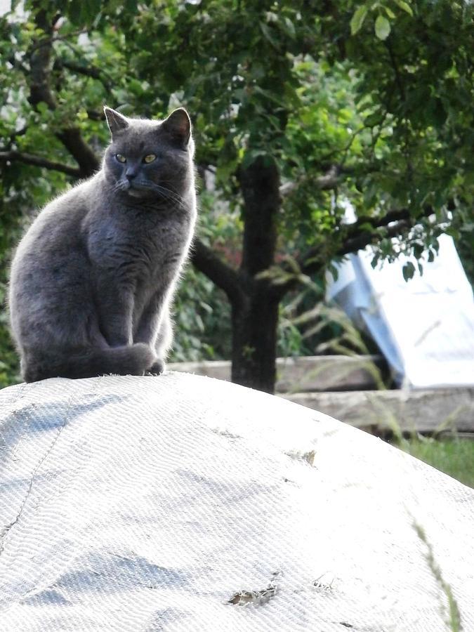 Cat Photograph - cat by Milos Pucek jr