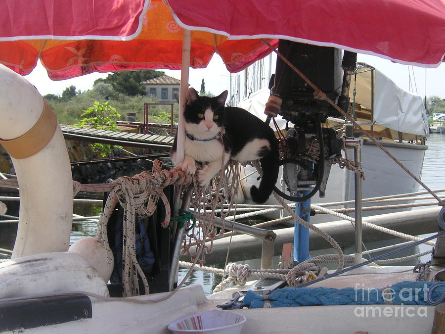Cat On Board Photograph by Rogerio Mariani