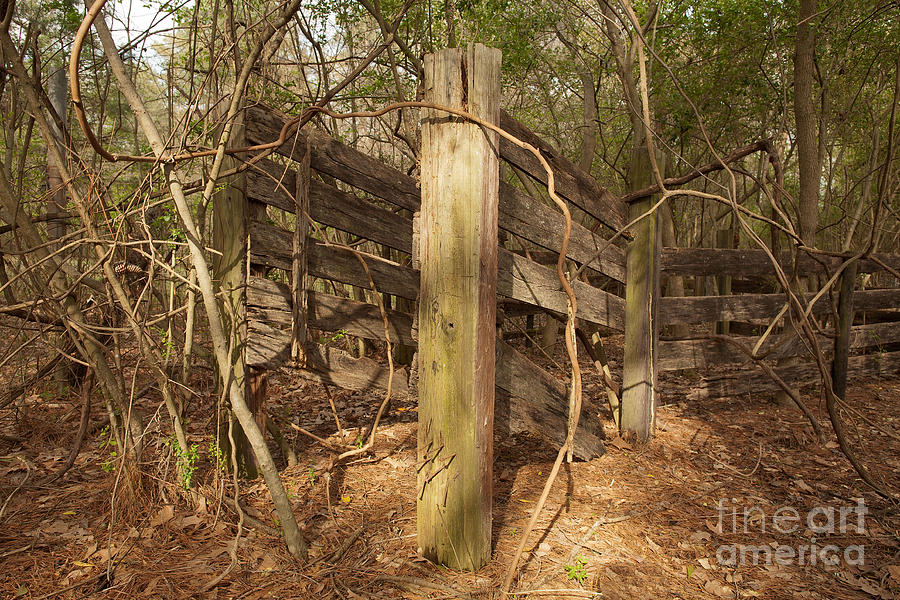 Catchpen Photograph by Russell Christie